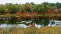 一沼の紅葉