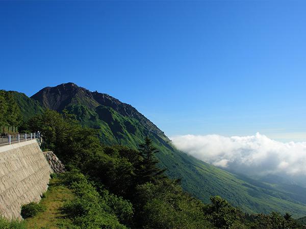 仁田峠 春はミヤマキリシマ、夏はヤマボウシ、秋は紅葉、冬は霧氷が楽しめます