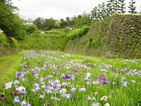 島原城のお堀 菖蒲や蓮を楽しめます