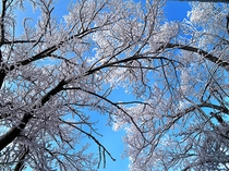 仁田峠 圧巻の霧氷!地元では花ぼうろとも呼びます