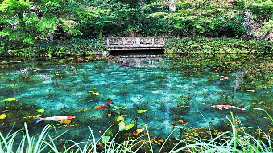 ◆モネの池(車で約45分)◆