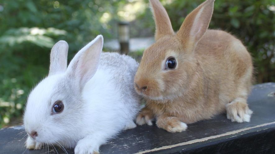 【敷地内】里山にはたくさんの動物たちがお客様をお出迎え
