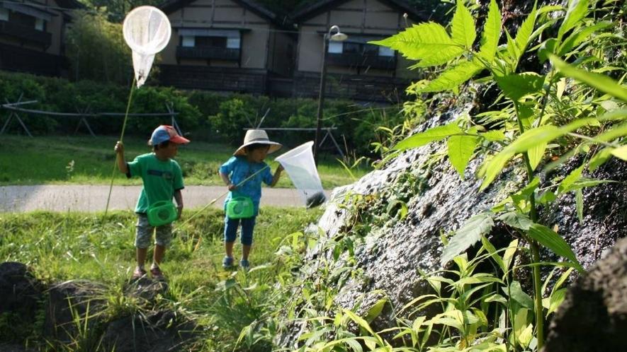 【敷地内】自然がいっぱい。蛍・カブトムシなども発見できるかも♪