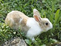 【里山の動物】里山にはたくさんの動物たちがお客様をお出迎え