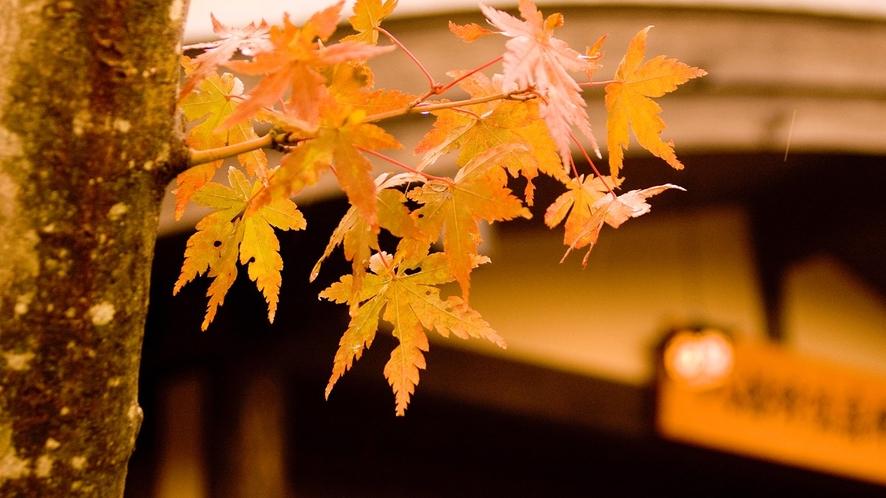 【秋の里山】帳場で皆様をお出迎え