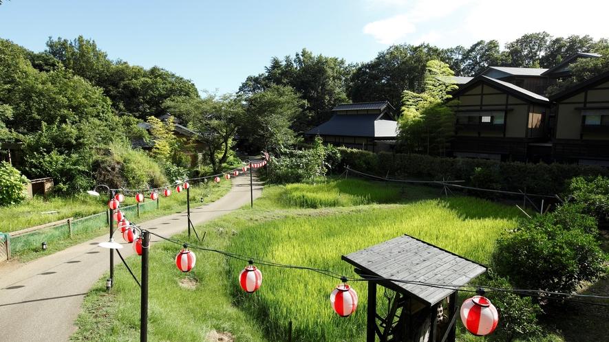 【敷地内】広大な敷地には、田んぼや畑と自然いっぱい