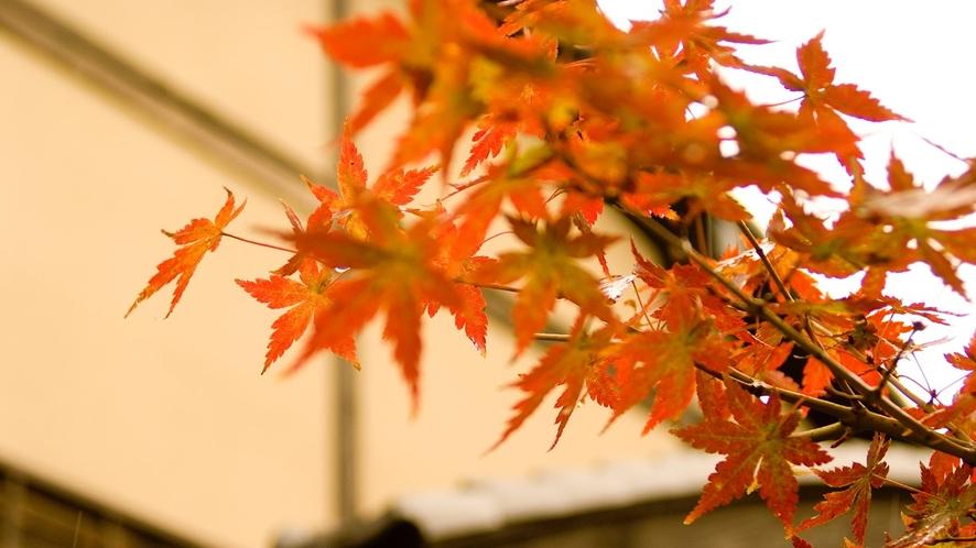 【秋の里山】紅く色づく紅葉たち
