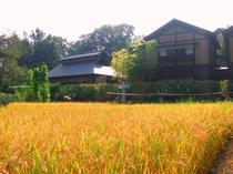 【秋の里山】毎年秋には稲刈り