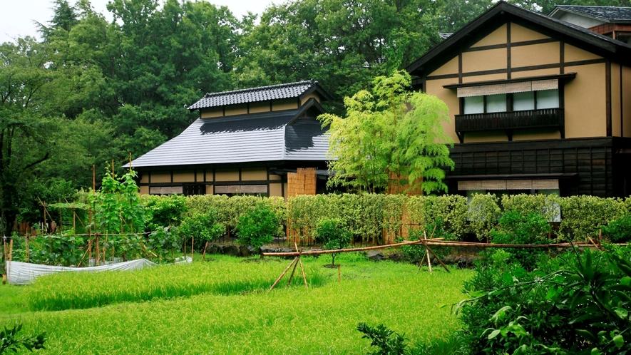 【離れ 竹ぶえ】敷地内の田んぼを囲うようにして建つ離れの客室