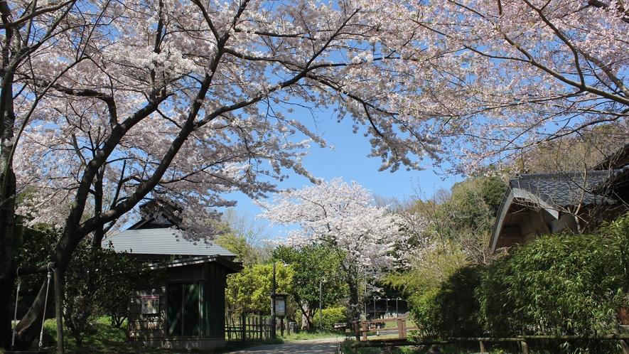 【春の里山】館内に桜が咲き誇ります。