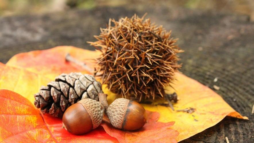 【ホテル周辺・秋の自然】森林浴コースを歩きながら、秋の自然をお楽しみください。