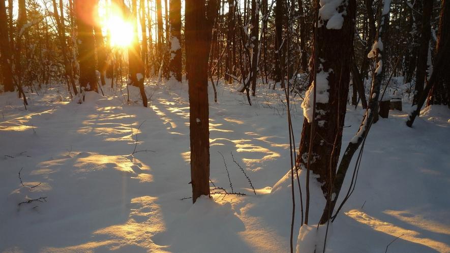 【ホテル周辺・冬の自然】晴れた日の朝は、朝日が雪に反射して、美しい光景を見せてくれます。