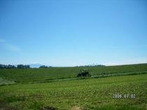 牧草収穫2