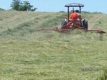 牧草収穫4
