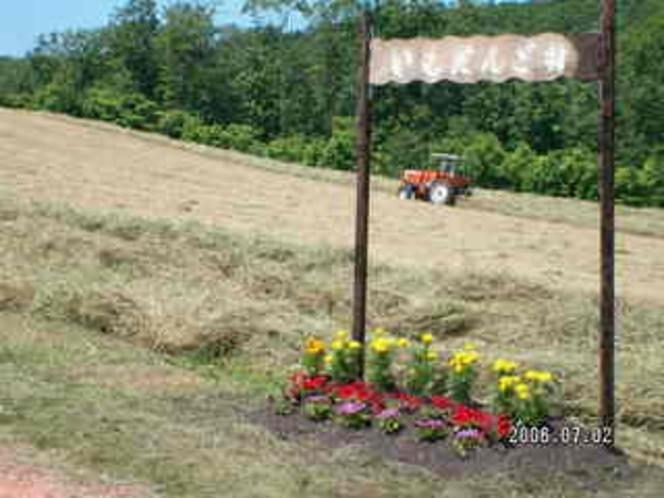 牧草収穫3