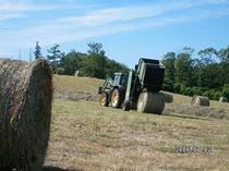 牧草収穫5