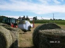 牧草収穫6