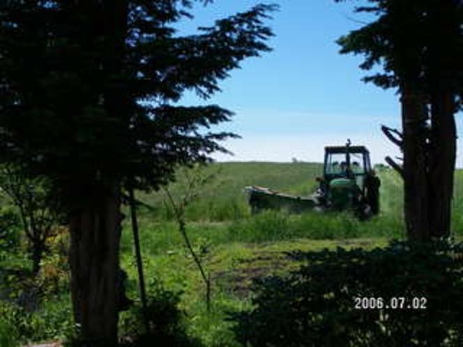 牧草収穫7
