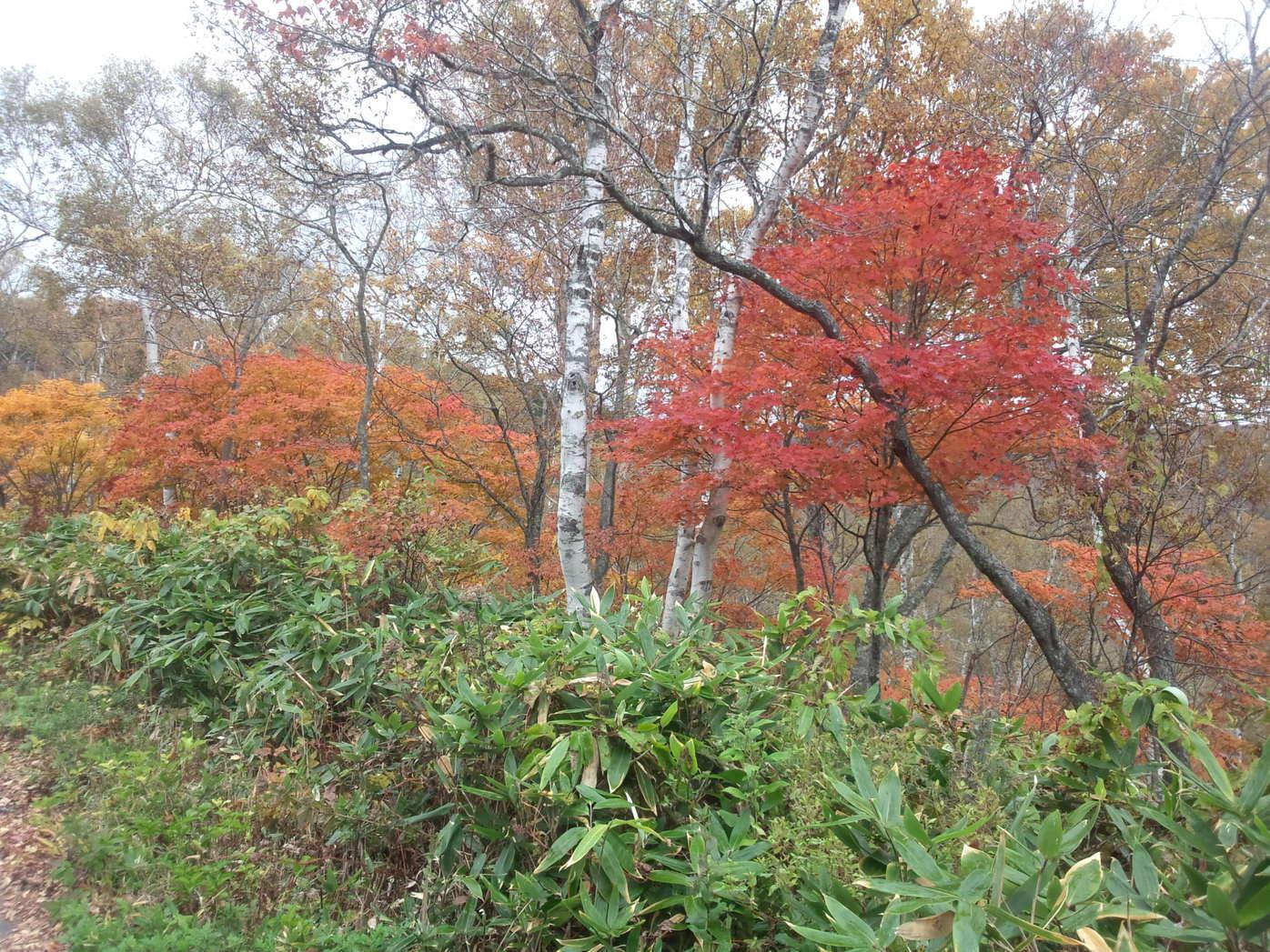紅葉(10月)