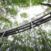 『国営アルプス安曇野公園(大町地区)』森の空中回廊