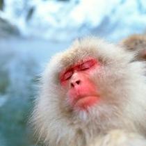 ◇地獄谷野猿公園にて・瞑想おサルさん