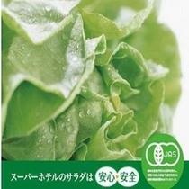 有機JAS認定野菜使用のサラダはミネラルが豊富です