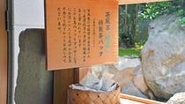 和楽園自慢の露天茶風呂。温泉脇にある「お茶パック」がおすすめ