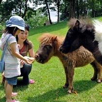 阿蘇 カドリー・ドミニオン【動物と触れ合い体験】