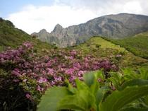 【春】阿蘇仙酔峡より高岳を見上げて