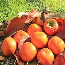 柿 正方形