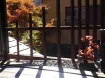 秋の中庭「和モダンもみじより」