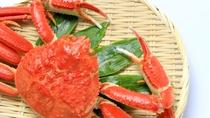 **ずわいがに(イメージ)/海辺ならではの新鮮な旬の魚介類をお楽しみください!