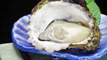**岩牡蠣(イメージ)/夏が旬の岩牡蠣は身が大きくクリーミーでありながら、味はあっさりです!