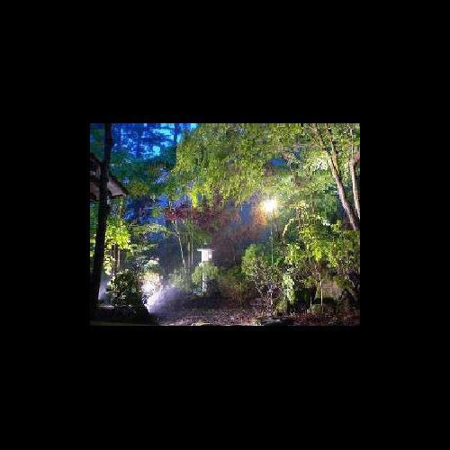 光で輝きを増す庭園の草木
