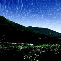 ≪6月≫蛍:辰野町 (写真提供:辰野町観光協会)