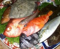 日本海地魚