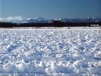 冬:真っ白な草原