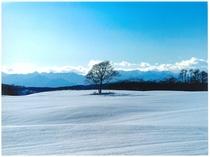 冬:静かな雪原