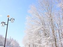 冬・シンボル