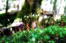 白駒池苔 緑