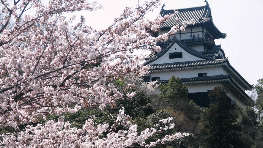 春の犬山城 眺望