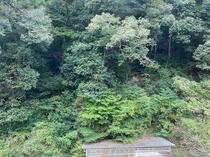 【山側】お部屋からの眺め
