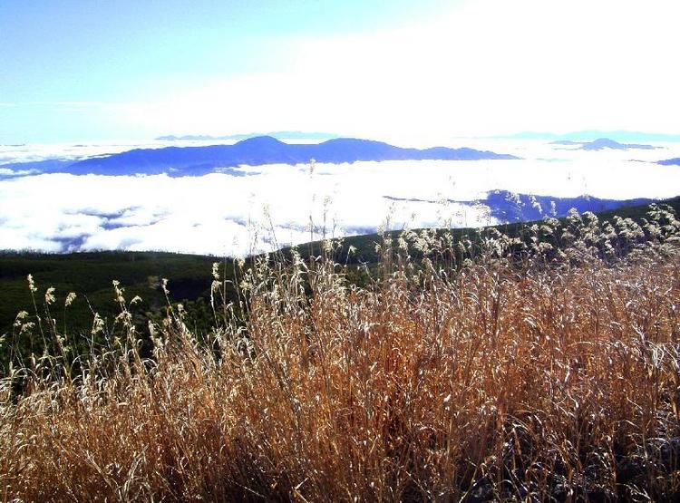 乗鞍から見たススキと雲海と山並み