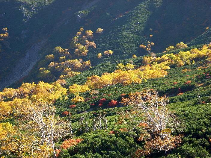 秋の乗鞍岳。榛松と紅葉
