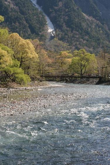 春の新緑の上高地の河童橋付近 縦