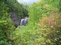 春 善五郎の滝