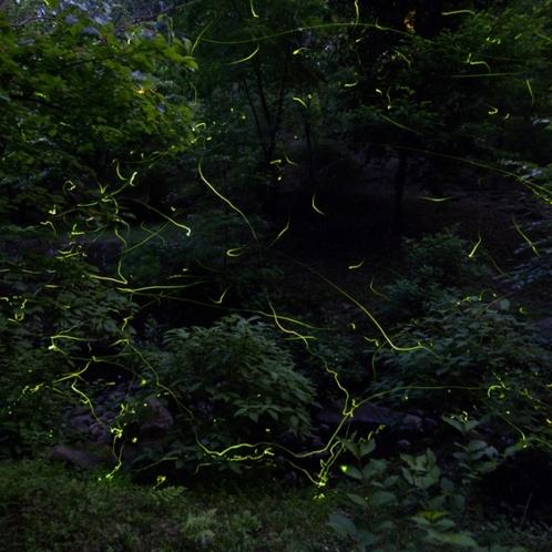 サンデンフォレスト ホタルの谷