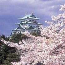 名古屋城(桜)