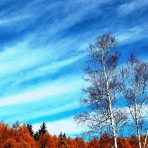 秋 カラマツの紅葉と青空