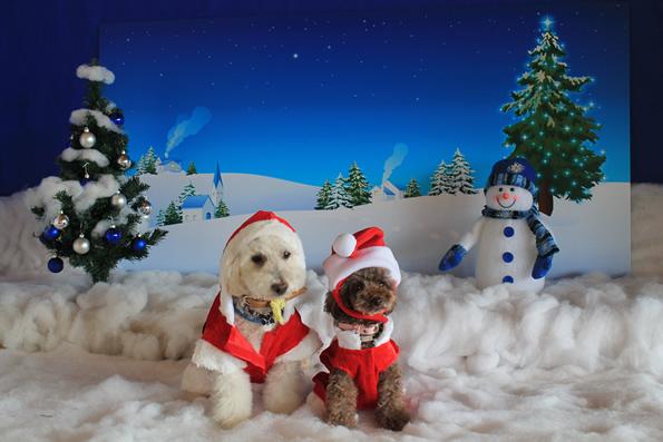 クリスマス写真 レオン&クレア